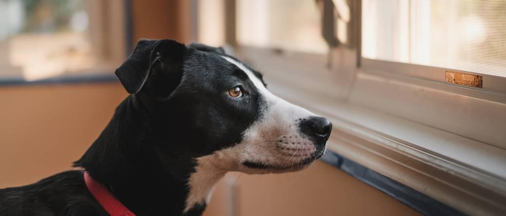 Uciążliwy pies sąsiada